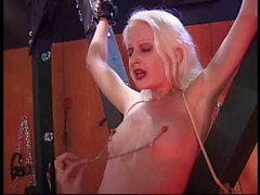 Hot blonde in nipple clamps gets tortured