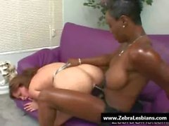 Zebra Girls - Ebony lesbian babes enjoy deep strap-on fuck 07