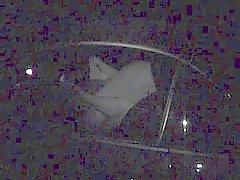Ouderen neuken in een auto .
