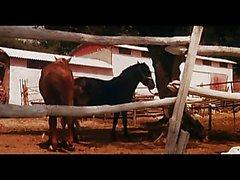 guza i konjic