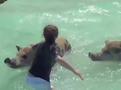 Swimming Pigs with girls in beach, Exuma, Bahamas
