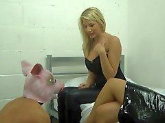 che umiliato Pig