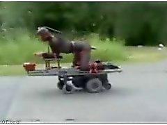Riding fucking machine