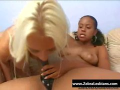 Zebra Girls - Ebony lesbian babes enjoy deep strap-on fuck 23