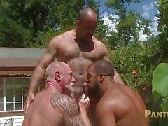 Bears gay Bearded condividere si massiccia verga la carne