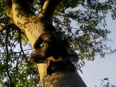 Indischer Tarzan-Jungen-Sex im Dschungel-Holz