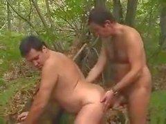Orsi Chubby nei boschi