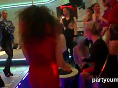 Hot kittens get absolutely crazy and naked at hardcore party
